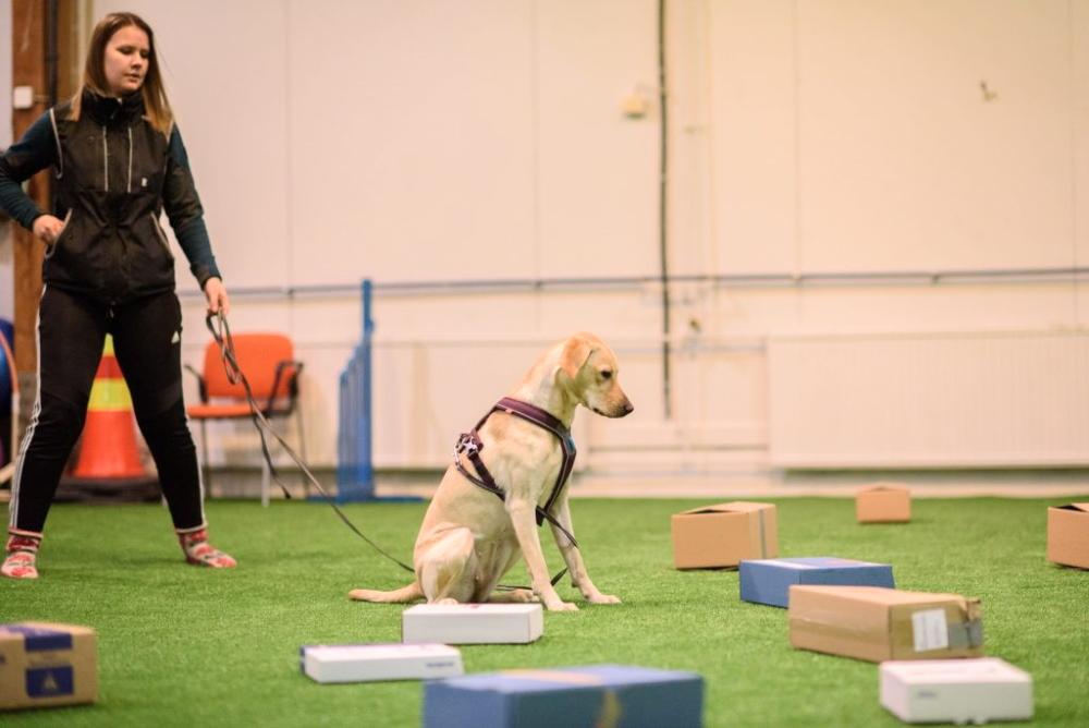 Selina Saimala kouluttaa noseworkia koiravalmennus Motivaatiossa Jyväskylässä.